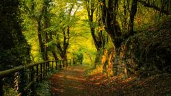 Forest Path (30)