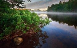 Forest river morning