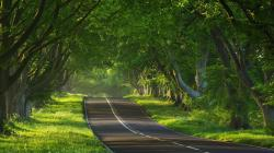 """Download the following Forest Road Background 36158 by clicking the orange button positioned underneath the """"Download Wallpaper"""" section."""