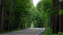 Beautiful-wallpapers-Forest Road -wallpaper