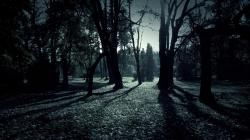 Dark Forest Shadows Hd Wallpaper Wallpapers 1920x1080px