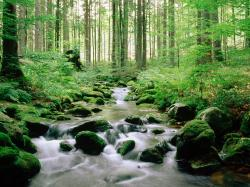 forest stream beautiful picture
