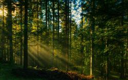 Forest Sun 33430 1920x1200 px