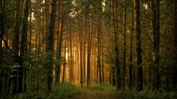 ... Forest Wallpaper ...