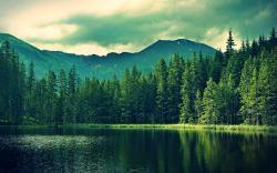 Pretty Forest Wallpaper