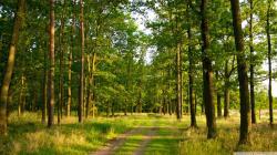 Forest Wallpaper (3)
