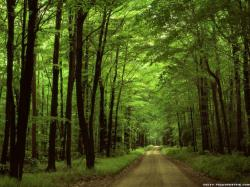 Forest Wallpaper (1)