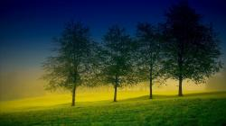 Description: The Wallpaper above is Four trees Wallpaper in Resolution 1600x900. Choose your Resolution and Download Four trees Wallpaper