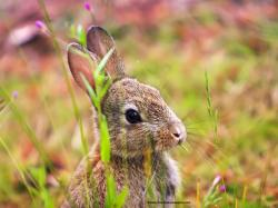 Free ipad animal wallpapers of a cute rabbit eating grass.