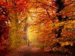 Free Autumn Wal