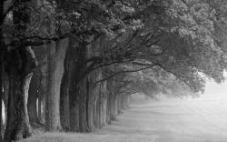 Black And White Wallpaper Of Nature Free Desktop 8 HD Wallpapers