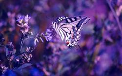 DOWNLOAD: butterfly-wallpaper free picture 2560 x 1600