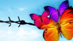 Beautiful Butterfly Insect Hd Wallpapers High Resolution