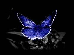 Download free butterfly pictures hd wallpaper