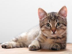 Free Cat Images