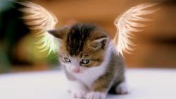 Desktop pictures of cats free wallpaper