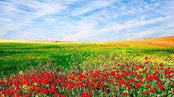 Flower Field Wallpaper Viewing Gallery 1920x1080px