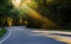 DOWNLOAD WALLPAPER Sunshine on Forest Road - FULL SIZE ...