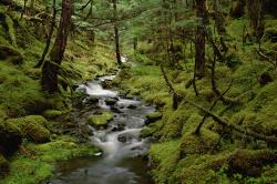 These free downloadable wallpapers are HD and available varying range of sizes and resolutions. Download Forest Stream HD Wallpapers absolutely free for ...