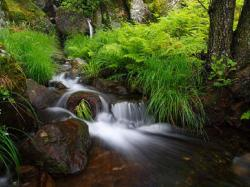 Free Forest Waterfall Wallpaper Download The