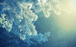Free Frost Wallpaper 29704 1920x1080 px