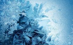 Free Frost Wallpaper 29700 2560x1600 px