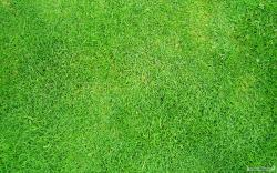 Free Grass Wallpaper 10263