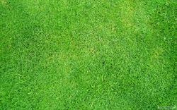 Free Grass Wallpaper 10263