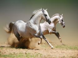 Horse Wallpaper for Computer Free Wide Wallpapers 1600x1200px