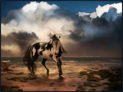 Free Horse Wallpaper: Wallpaper Free Horse 1024x768px