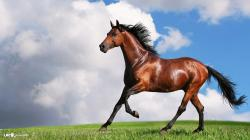beautiful horse high definition wallpaper free