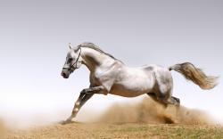 ... Horse Wallpaper ...