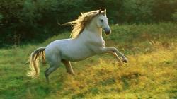 Free Horse Wallpaper 19883 2560x1600 px