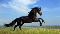 Horse Latest HD Wallpapers Free Download