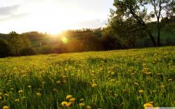 Meadow Wallpapers 13860