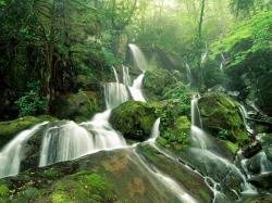 Beautiful Free Nature Wallpapers HD