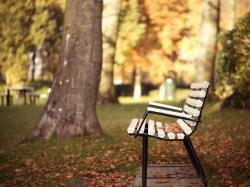 Free Park Bench Wallpaper 14647