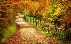 HD Wallpapers Autumn Free Wallpaper - Autumn Path