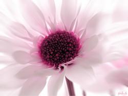 Flower wallpaper Pink Flower Wallpaper-1