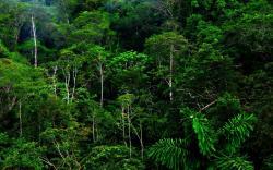 Free Rainforest Wallpaper