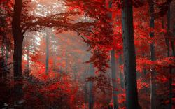 Autumn red forest Wallpapers Pictures Photos Images. «