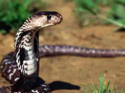 black snake high resolution wallpaper