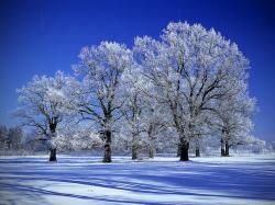 Free Snow Trees Wallpaper 13722