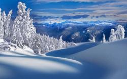 ... Snowy Wallpaper ...