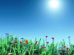 Spring Desktop Background Free-1