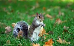 Squirrel Wallpapersvbv