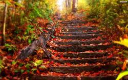 Autumn Stairs Wallpaper