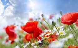 beautiful summer flowers wallpaper