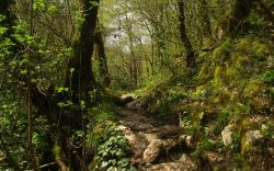 Free Wallpapers Spring Trail in Forest Wallpaper 1920x1200px