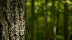 Free Tree Bark Wallpaper 26072 1920x1200 px